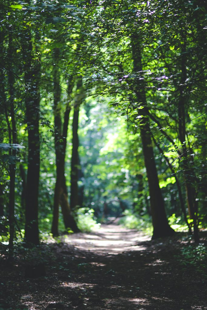 Path through the trees for relationship counseling.  You can get help in couples therapy in Wesley Chapel, FL  and in Marriage counseling in Wesley Chapel, FL  and in online counseling in Florida with christian therapists at Sheltering Oaks Counseling